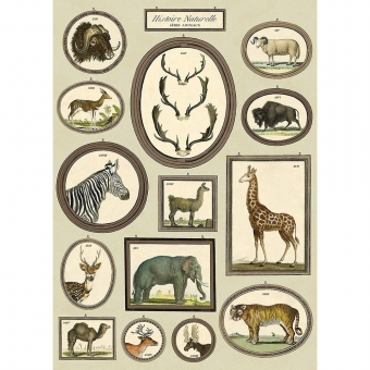 vintage poster  Natural History Dieren Goed Gestyled Brielle